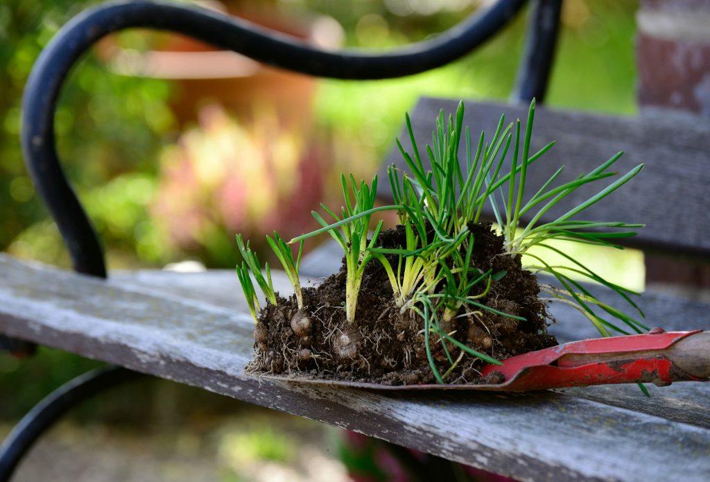 Is jouw tuin al klaar voor het voorjaar_