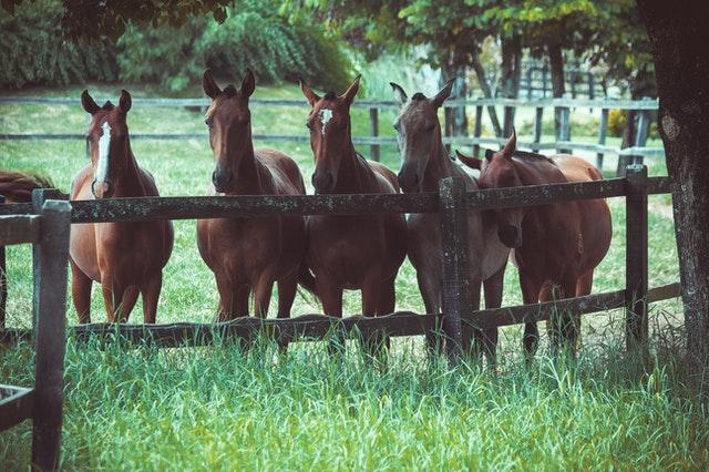 Veilige omheining voor jouw paarden?
