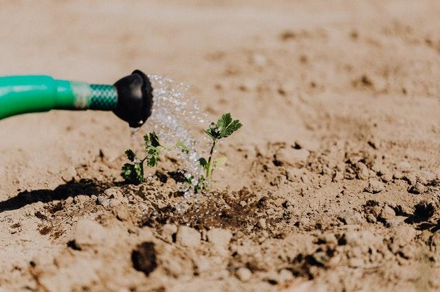 Tips om je tuin gereed te maken voor de zomer